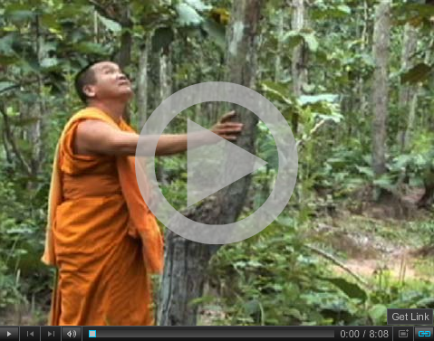 Forest Monk Video